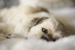 Dog Photographer Chelsea Bayside Frankston