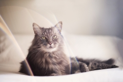 Melbourne Pet Cat and Dog Photographer003