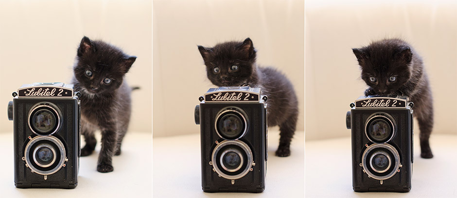 Melbourne-Cat-and-Dog-Photography-Australia
