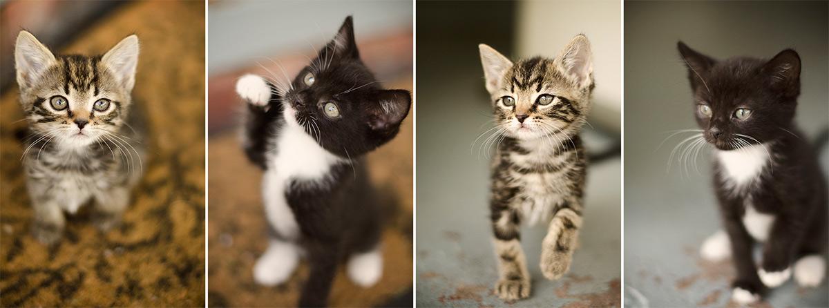 Rescue-Kittens-Melbourne-Australia