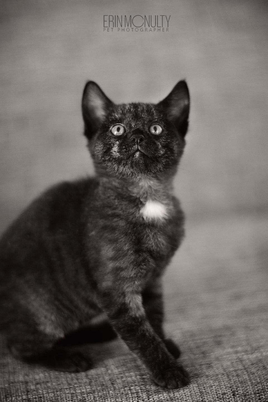 Melbourne Pet Dog Amp Cat Photography Melbourne Cat