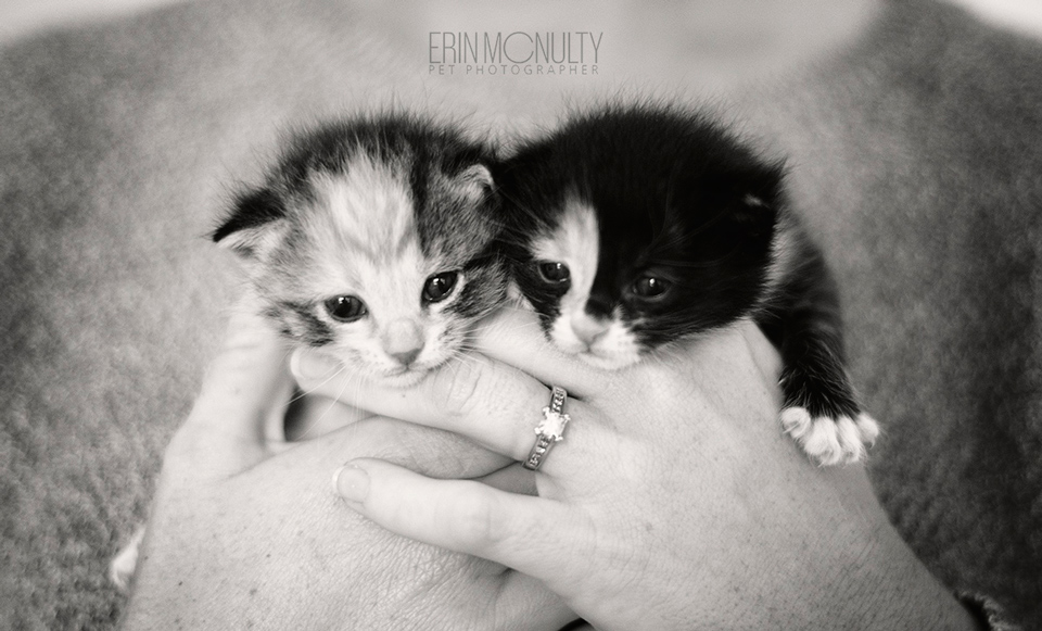 cat-and-kitten-rescue-photographer-melbourne